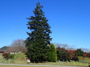 宮ケ瀬クリスマスツリー