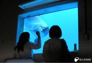 新江ノ島水族館 イルカに恋する