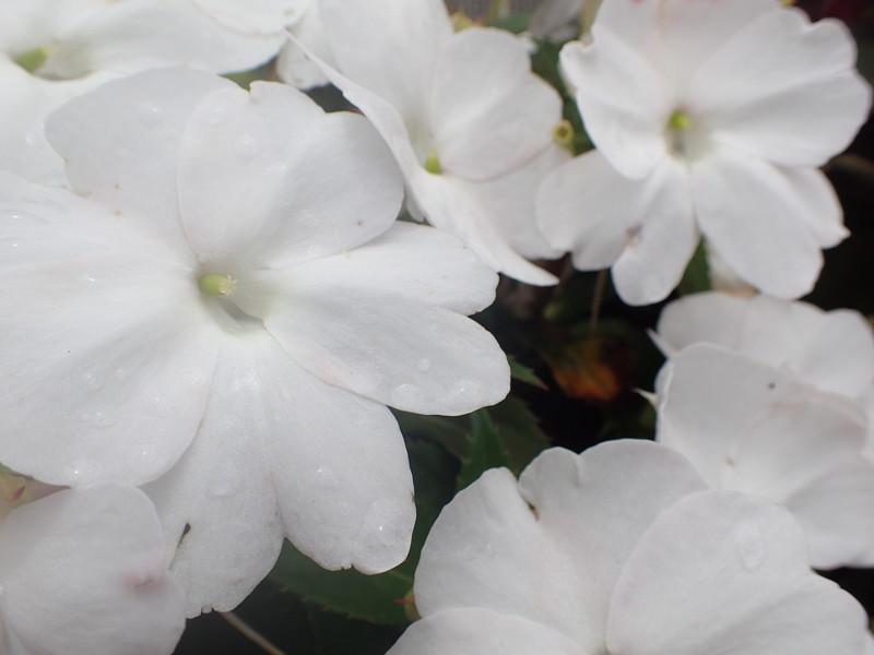池江璃花子