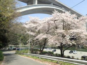 小倉橋と桜とバーベキュー