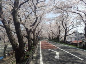 あつぎ 桜とバーベキュー 相模川