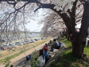 厚木 相模川 桜とランチ