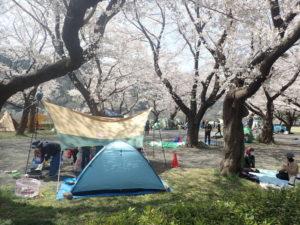 上大島キャンプ場と桜