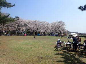 上大島キャンプ場 芝生エリア
