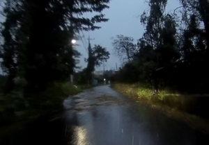 台風散乱物:落ち葉