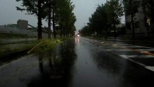 台風散乱物:倒木8