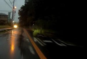 台風散乱物:倒木5長い倒木群