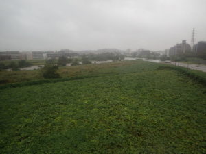 鶴見川と鳥山川合流
