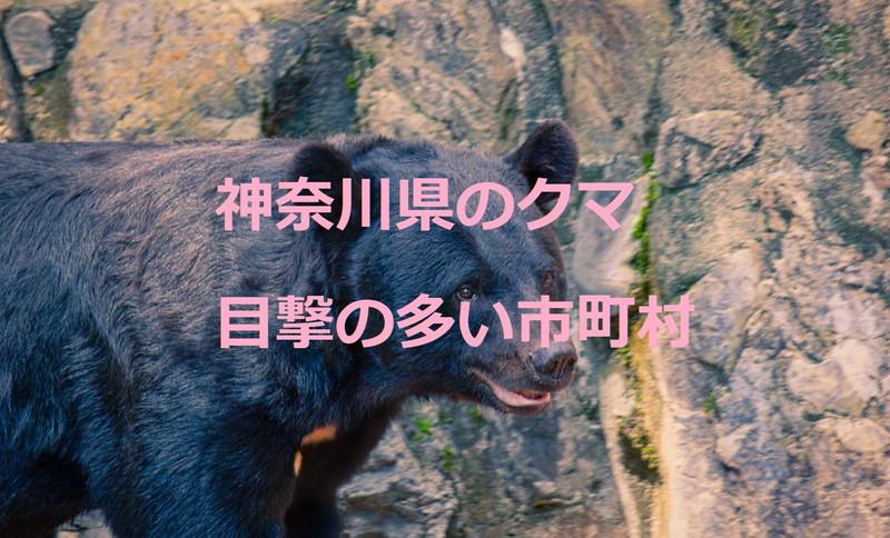 神奈川県のクマ:熊の目撃が多い市町村